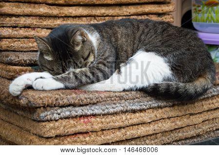 Tabby Stray Cat Sleeping on a Mat