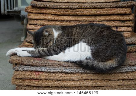 Stray Tabby Cat Sleeping on a Mat