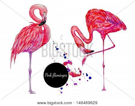 Watercolor pink flamingos, exotic birds, hand drawn tropical illustration isolated on white background
