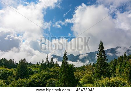 High altitude forest and billowing clouds at Alishan National Forest in Chiayi District, Taiwan