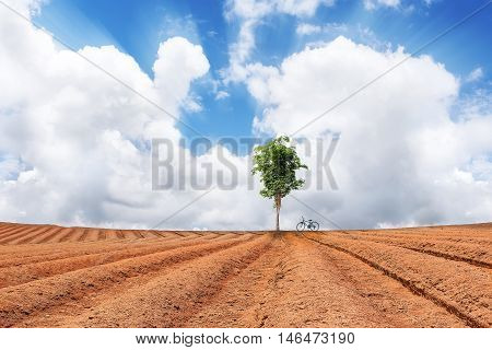 Green tree and bicycle in Ploughed field under blue sky and white cloud
