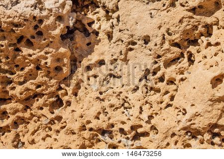 Close up of  a Brown Porous Rock
