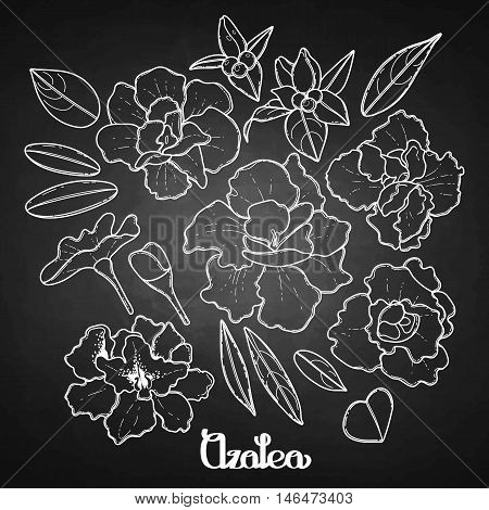 Azalea leaves and flowers collection. Vector graphic floral decorations isolated on chalkboard