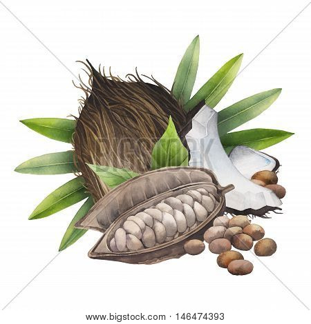 Watercolor dried cocoa fruit and coconut. Hand drawn exotic design isolated on white background.