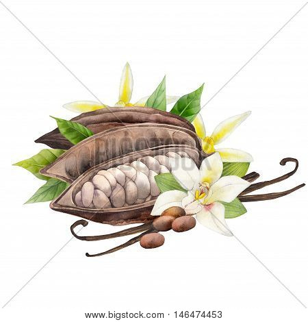 Watercolor dried cocoa fruit and vanilla flowers. Hand drawn exotic design isolated on white background