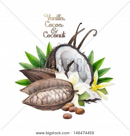 Watercolor cocoa fruit, coconut and vanilla flowers. Hand drawn design isolated on white background