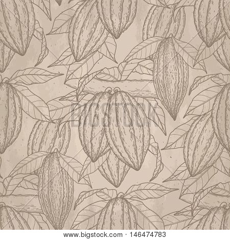 Graphic cocoa fruits on the branch on aged paper. Hand drawn exotic cacao plant. Vector seamless pattern