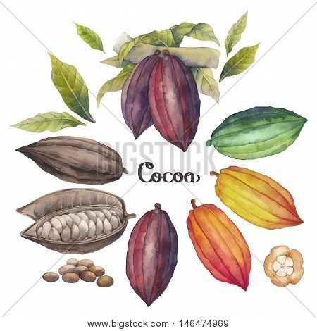 Watercolor cocoa fruit colection isolated on white background. Hand drawn exotic cacao plants