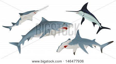 Set Fish sea animal. Isolated on white vector illustration