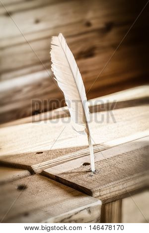 Feather pen for writing and a wooden table close-up.