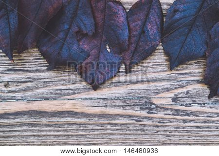 Brown and gray leaves on wooden background