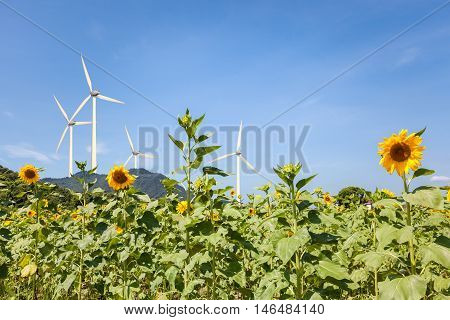 sunflower field and wind power clean energy background