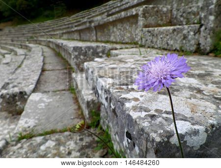 A Purple Flower at an Ancient Theatre, Greece