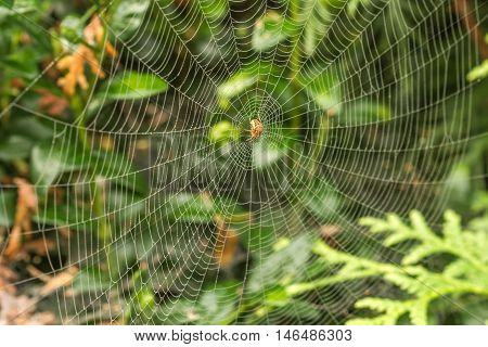 Spider In Morning