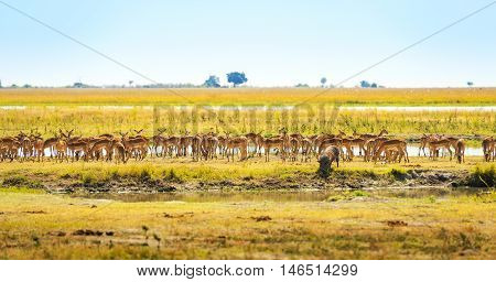 Animals At Watering Hole In Africa