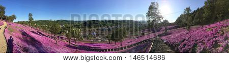 Pink moss field on the mountains in Hokkaido Japan