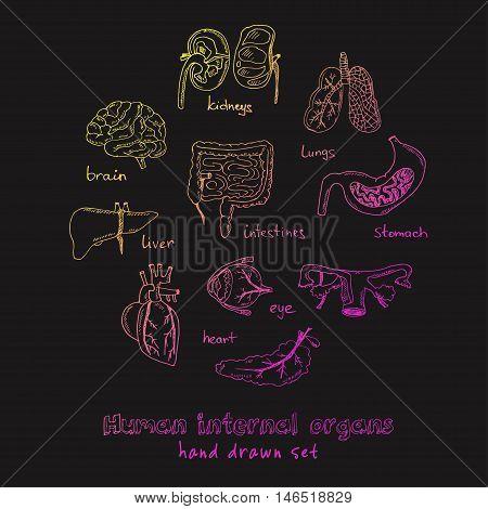 Human internals doodle set. Vintage illustration for identity, design, decoration, packages product and interior decorating