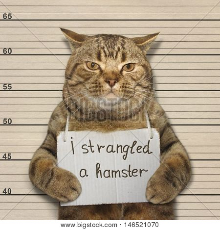 A big cat strangled a small hamster. It was arrested.
