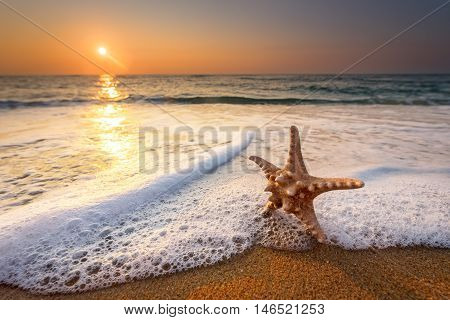 sea star starfish on beach blue sea and sunrise time.
