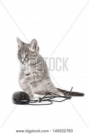 kitten playing with computer mouse isolated on white background