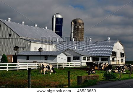 Lancaster County Pennsylvania - June 6 2015: Jersey cows grazing in a field next to an Amish barn with silos *