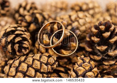 Two gold wedding rings lying on a pile of pine cones