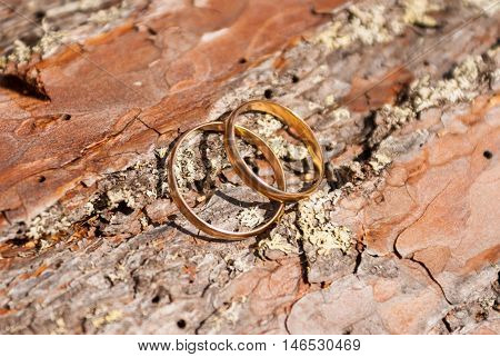 Two gold wedding rings lying on a bark of pine