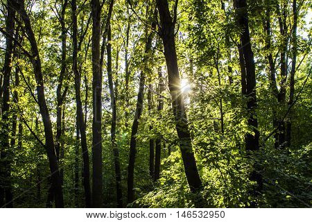 woods forest. trees background. green nature landscape. wilderness intro 1920x1080