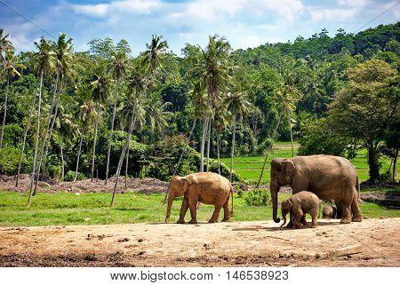 elephant family walking towards a water hole