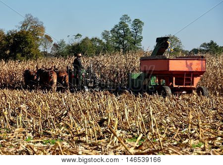 Lancaster County Pennsylvania - October 19 2015: Amish farmer operating a threshing machine pulled by a team of seven donkeys which removes corn cobs from the dried plants