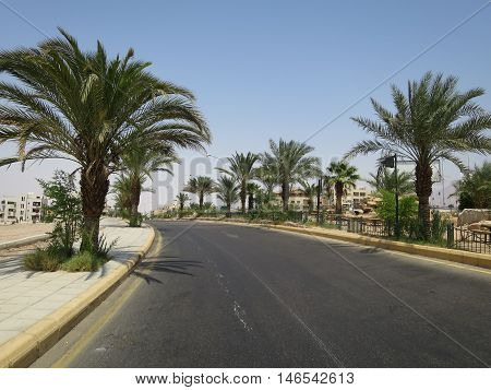 A road lined with date palms in Jordan.