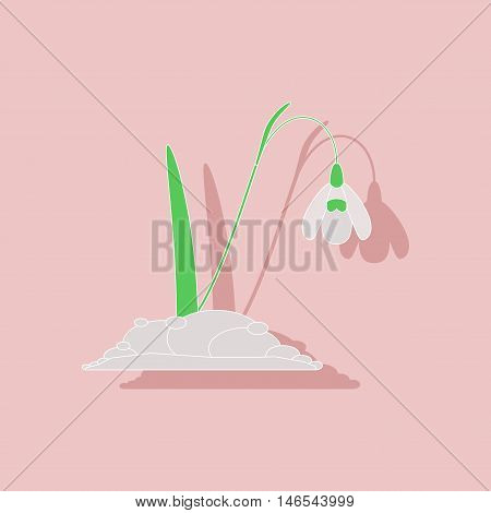 paper sticker on stylish background of plant Galanthus