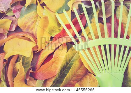Autumn Fall Background With Green Rake.