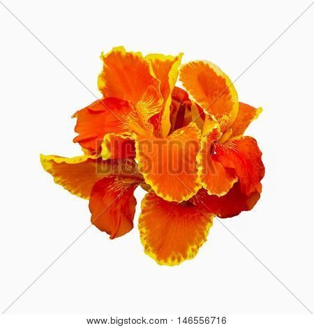 Red Canna flowers on white background, Red flower