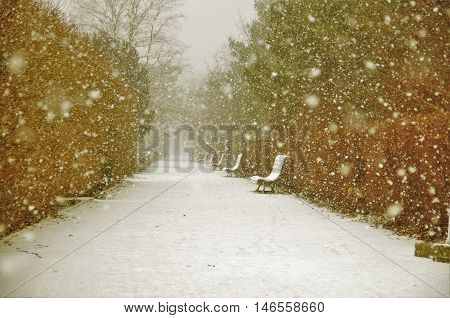 snowfall in the park in the daytime