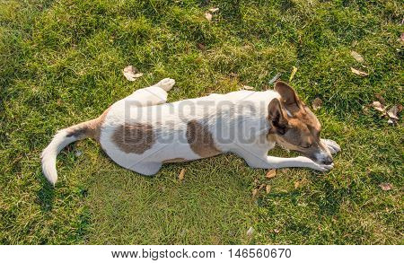 Stray Dog Sitting on the Grass in the Park