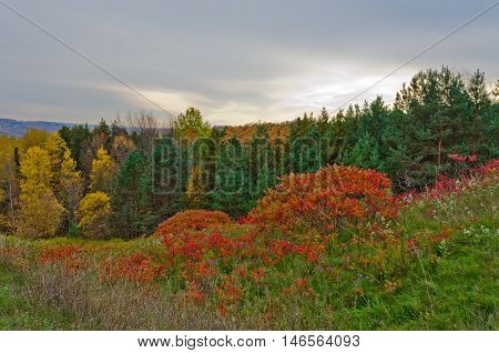 Fall's Colorful Trees