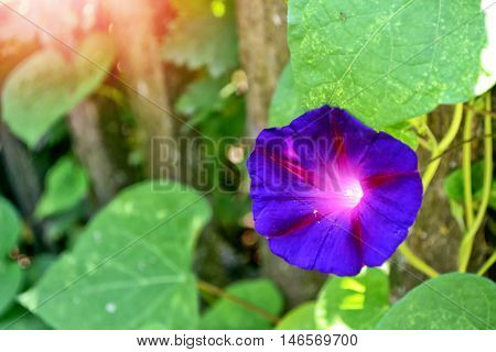 petunia colorful flowers on a background summer landscape