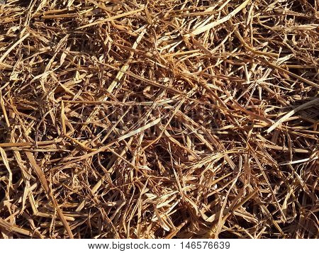 close up dry straw in nature garden