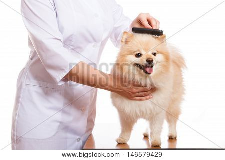The Veterinarian Holds The Dog, Spitz Combs And Comb, Isolated Background