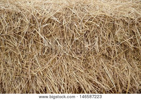 close up dry straw texture in garden