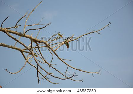 close up dry branch dead tree in garden
