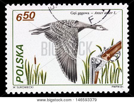 Poland - Circa 1981