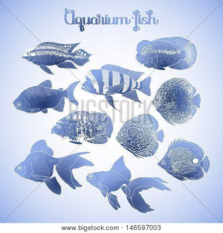 Graphic aquarium isolated fish in blue colors. Fresh water creatures.