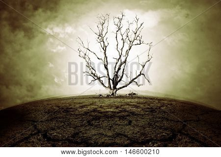 die tree and dry land with strong sky - concept picture of bad enviroment in black and white tone