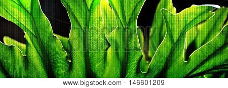 Close up of fresh green leaves in sunlight