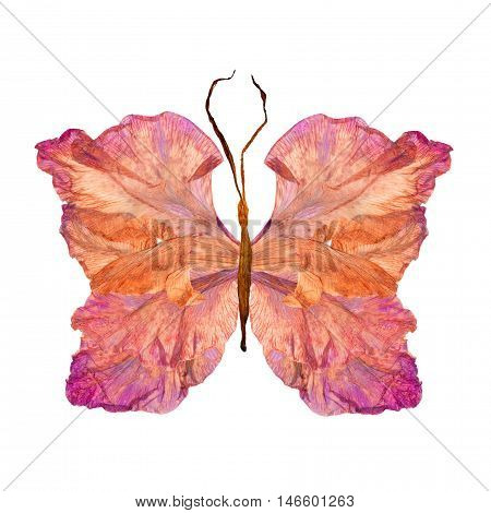 floral butterfly made from bizarre curved extruded dried lily petals dry gladiolus flower