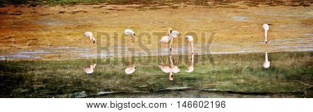 Landscape with Flamingos feeding early in the morning