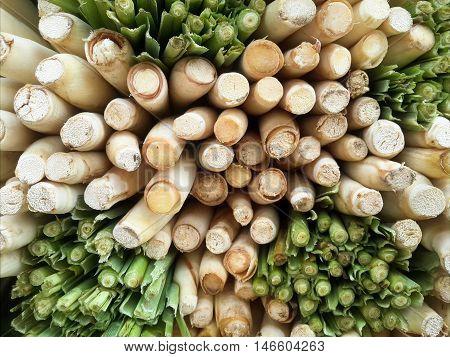 close up fresh green lemongrass for cooking