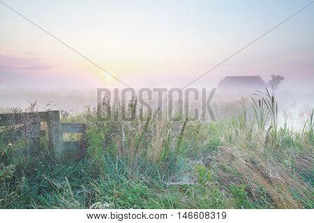 Dutch foggy farmland at sunrise in Netherlands